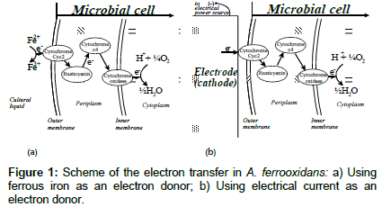 biochemical-bioprocess-engineering-electron-transfer