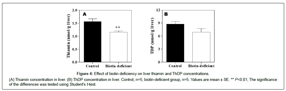 clinical-nutrition-metabolism-liver-thiamin