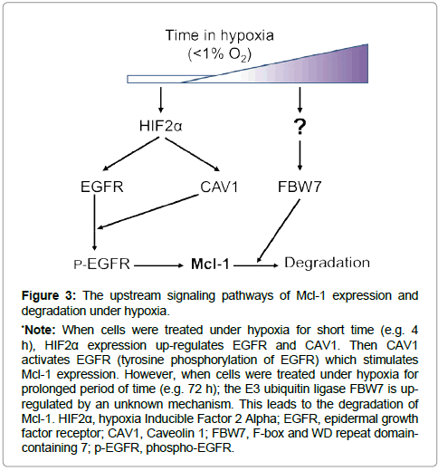 clinical-oncology-degradation-hypoxia