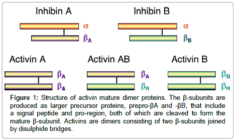 Embryo Implantation and Inhibin Dimers (Activin) as Diagnosis of ...
