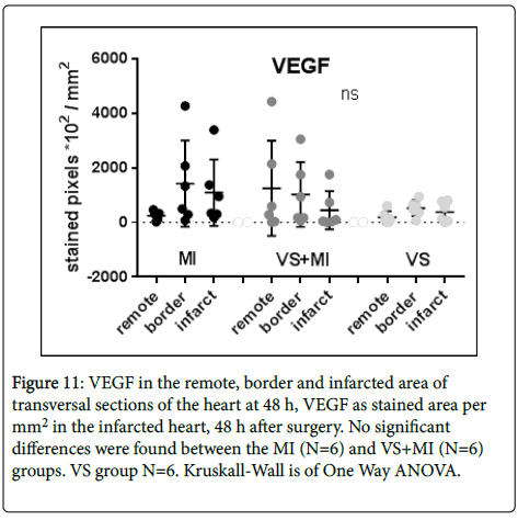 international-journal-cardiovascular-VEGF-stained