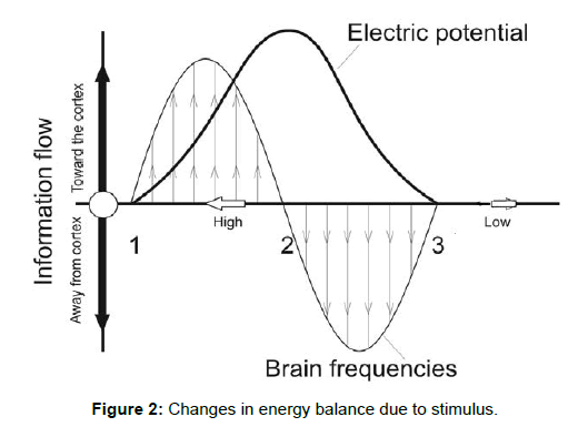 neuroscience-energy-balance