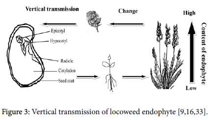 plant-physiology-Vertical-transmission