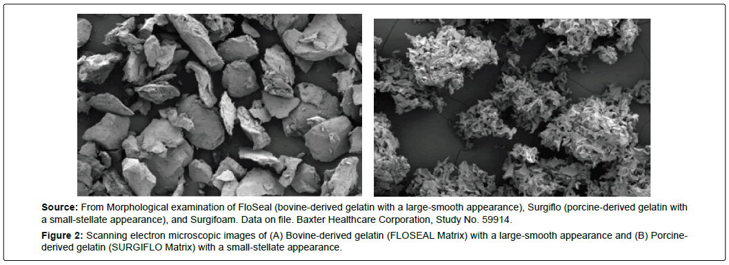 spine-neurosurgery-bovine-derived-gelatin