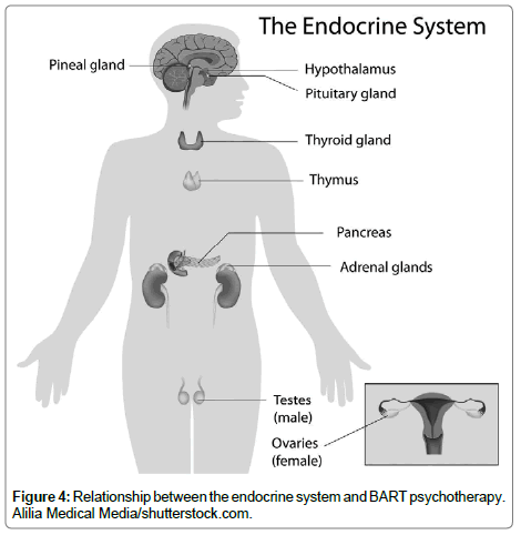 traumatic-stress-endocrine-system