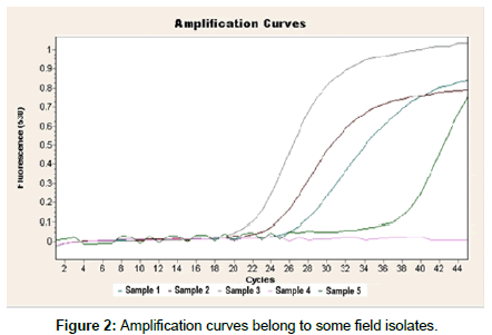 veterinary-science-Amplification-curves