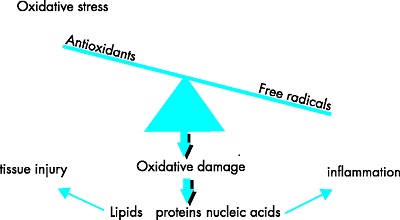 Membrane Lipid Oxidation as a Negative Feedback Loop Modulating Cell Response to Oxidative Stress
