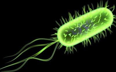 Role of Escherichia coli Pili Adhesion Molecule to Inhibit Escherichia coli Adhesion to Human Spermatozoa In vitro