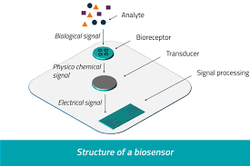 Biosensors in Various Fields