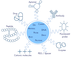 Conjugation of Peptides and PEG onto PMMA Surfaces via a Mild Aminolysis Reaction