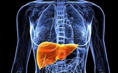 Protection against Carbon Tetrachloride-Induced Liver Damage by Citric Acid