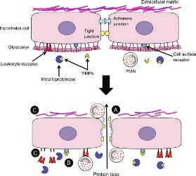 New Insights into the Tissue Homeostasis between TIMP and MMP in Dupuytren's Disease