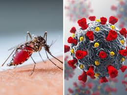 Covid-19 Impact on Dengue