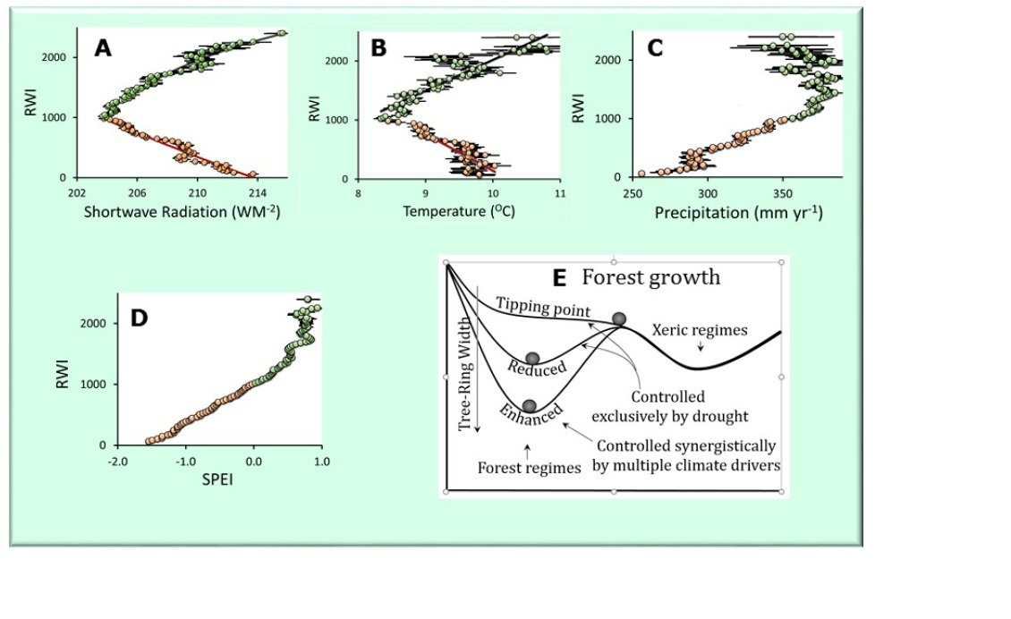 Bifurcated Response of a Regional Forest to Drought