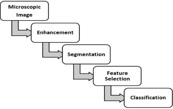 Evaluation of Estimation Quality of a General Paradigm for Categorization Animal Abundance Once Observations Are Counts