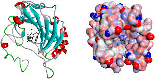 In Silico Molecular Docking Study of Some Already Approved Antiviral Drugs, Vitamins and Phytochemical Components Against Rna Dependent Rna Polymerase of Sars-Cov-2 Virus