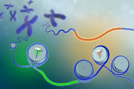 Electronic Medical Records and Genetic Science (eMERGE) Network