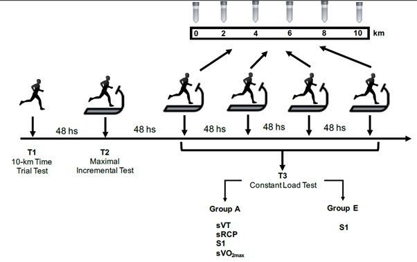 The Performance in 10 km Races Depends on Blood Buffering Capacity