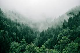 Try not to Make Forest Management All about Climate Change