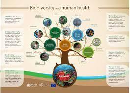 Biodiversity Includes the Diversity