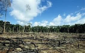Tragedy of the Commons and Economics of Deforestation in Nigeria