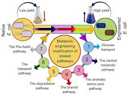 Metabolic Designing of Hereditary and Administrative Cycles