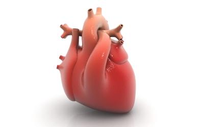 Video Stabilization and Region-of-Interest Tracking in Cardiac MRI Domain