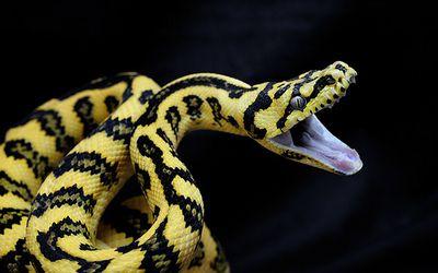 Analgesic, Antipyretic and Anti-inflammatory Activities of the Egyptian Spitting Cobra; Naja nubiae Venom
