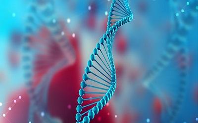 DNA: Desoxyribonucleic Acid