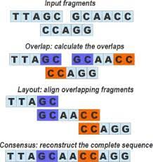 Removal of DNA Fragment