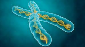 Global MHC, Class I, Class II Genes in Invertebrates