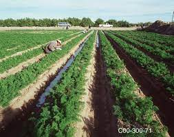 Extraction of Water for Irrigation and Human Consumption