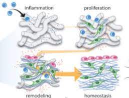 Tissue Regeneration is A Part of the Organism's Tissue that is Traumatized by External Forces and Partially Lost