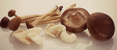 In vivo Evaluation of Antimalarial and Cytotoxic Properties of Crude Aqueous Extract of the Fruiting Body of Medicinal Mushroom, Ganoderma lucidum (W.Curt.:Fr.) P. Karst in Plasmodium berghei-Infected Mice