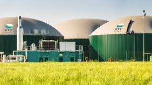 Protection Coordination of Biogas Power Plant Connected to Distribution Network