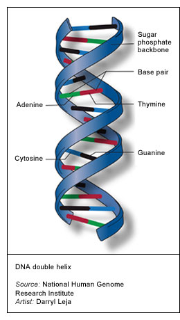 Polymerase Chain Reaction between Nucleic acids in PCR  Laboratories