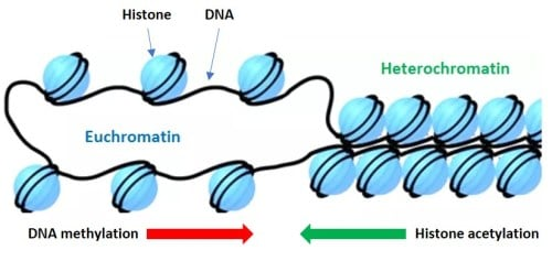 The Nature and Inheritance of Epigenetic Marks