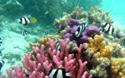 Status of Intertidal Biodiversity of Narara Reef Marine National Park, Gulf of Kachchh, Gujarat