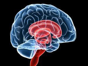 Impacts of Neurosurgery