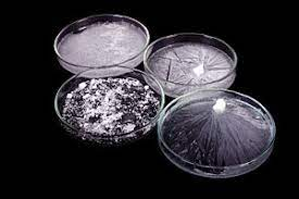 DNA and Ribonucleic Corrosive (RNA) are Nucleic Acids
