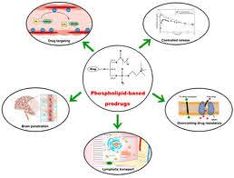 Prodrug in Pharmaceutics