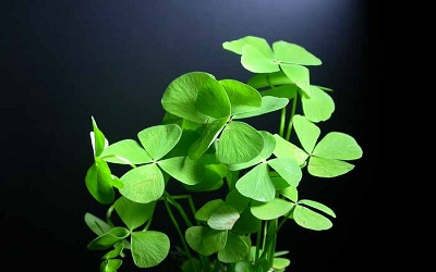 Effects of Exogenous Spermidine on Cell Wall Composition and Carbohydrate Metabolism of Marsilea Plants under Cadmium Stress
