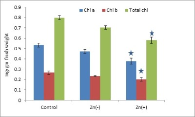 Effects of Zinc Stress on Growth, Photosynthetic Pigments, Antioxidative Enzymes and Protein Content of Black Gram