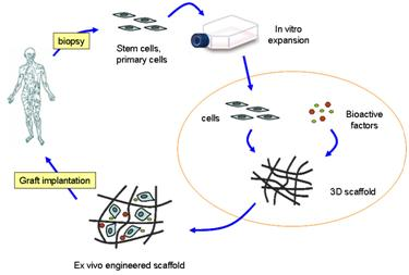 2-D Graphene and Derivatives- Based Scaffolds in Regenerative Medicine: Innovative Boosters Mimicking 3-D Cell Microenvironment