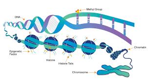 Stem Cell Epigenetics