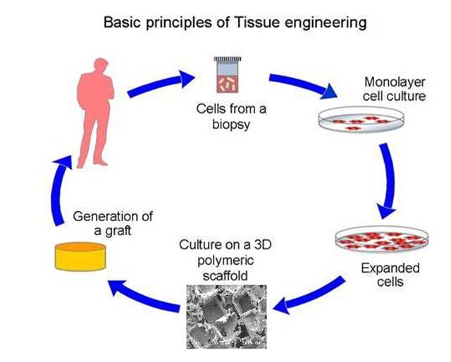 Strategic Challenges in Practicing Tissue Engineering and Regenerative Medicine