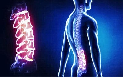 Use of Fetal Stem Cells for Slowing Down Aging of the Spine