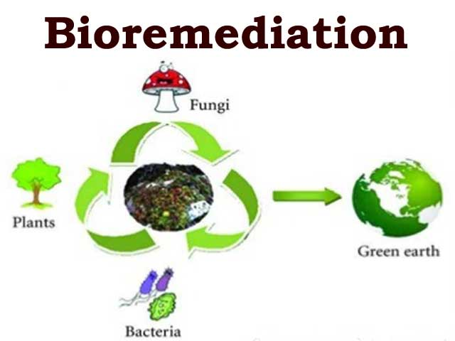 Process of Bioremediation