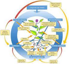 Anthropogenic Properties of Soil