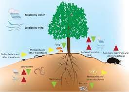 Biodiversity Help in Soil Formation
